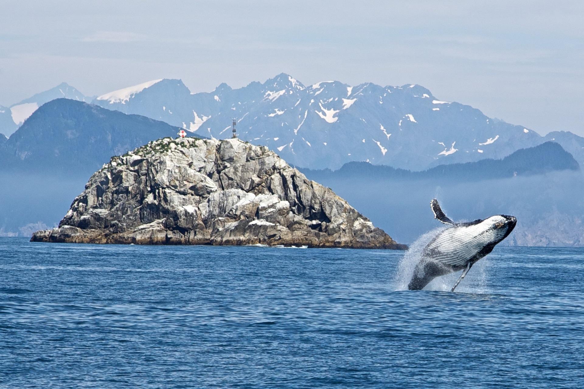 Noorwegen walvissen Lofoten Vesteralen Zeilreis