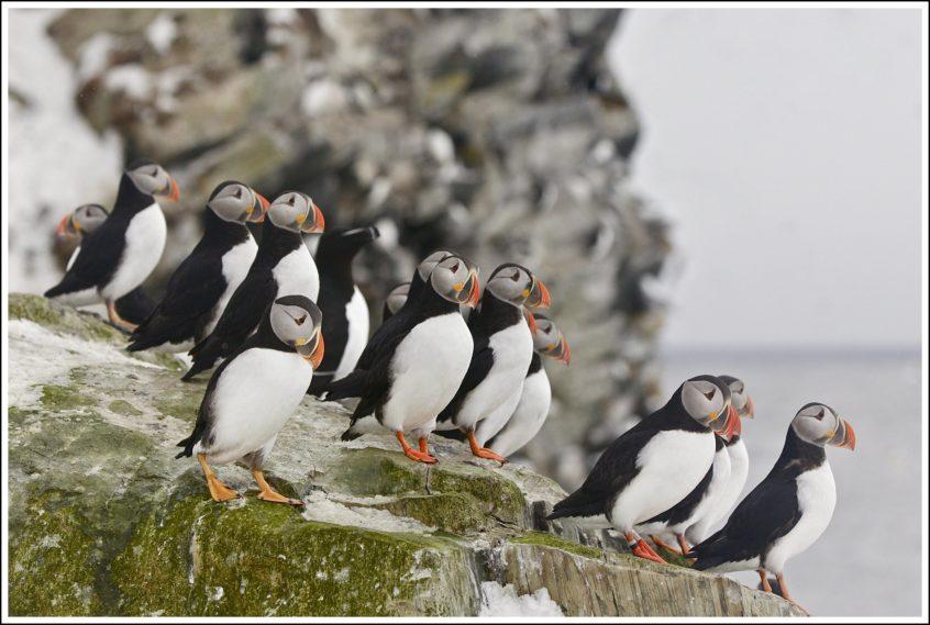 de 3 meest bijzondere dieren in Noord-Noorwegen: papegaaiduikers, orka's en zee-arenden, rotskusten